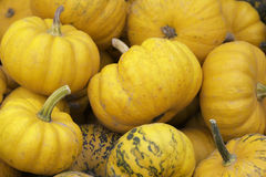 Orange Pumkins Stock Photo
