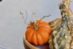 Orange pumpa med en lockig stam med en grön gropig kalebass i en bunkebakgrund Arkivfoto