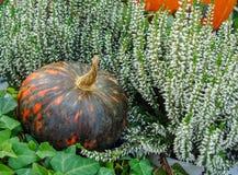 Orange pumpa med svarta band bland blommor och gräsplaner arkivfoton