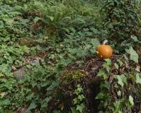 Orange pumpasammanträde på en stubbe i skogen med ormbunkar och murgrönan som omger den royaltyfria bilder