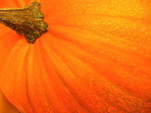 Orange pumpkin Stock Photography