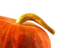 Orange pumpkin. A close-up shot of a nice orange pumpkin and its peduncle Royalty Free Stock Photos
