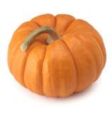 Orange pumpkin. Pumpkin orange halloween thanksgiving fall harvest isolated Stock Image