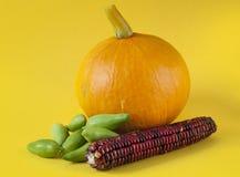 Orange pumpkin achocha vegetable and corn detail Stock Images