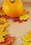Orange pumpkin against maple-leaf background. Composition Stock Photos
