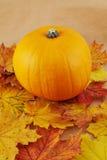 Orange pumpkin against maple-leaf background. Composition Royalty Free Stock Images