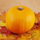 Orange pumpkin against maple-leaf background. Composition Royalty Free Stock Photos