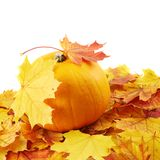 Orange pumpkin against maple-leaf composition Royalty Free Stock Photo