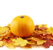 Orange pumpkin against maple-leaf composition Stock Photos