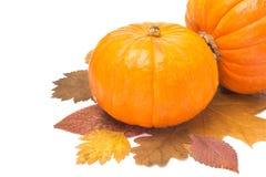 Orange pumpkin on autumn leaves isolated on white Royalty Free Stock Photos