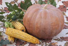 Orange pumpkin and corn cobs lying next. Orange pumpkin and corn on the cob close-up on the tablecloth Stock Photo