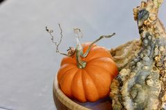 Orange pumpkin with a curly stem with a green bumpy gourd in a bowl background. Orange little pumpkin with a curly brown stem and a green bumpy gourd in a bowl Stock Photo