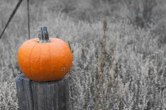 Orange pumpkin on a fence post, black and white background royalty free stock photo