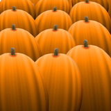 Orange Pumpkin Field Royalty Free Stock Images