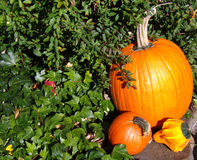 Orange pumpkin gourds accenting Autumn season Royalty Free Stock Images