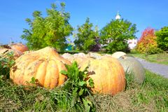 Orange pumpkin on the grass Stock Images