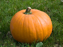 Orange pumpkin on the grass Stock Photo