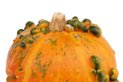 Orange pumpkin green bulbs closeup Stock Photography