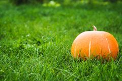 Pumpkin on the green grass Royalty Free Stock Photo