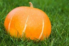 Pumpkin on the green grass Stock Photo