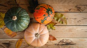 Pumpkin and squashes on wooden background, top view, copy space royalty free stock image