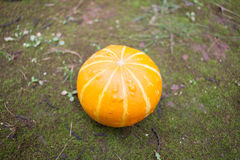 Orange pumpkin on ground Stock Photo