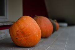 Orange pumpkin. Grown in private garden Royalty Free Stock Image