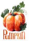 Orange pumpkin. Hand drawing watercolor on white background with title. royalty free illustration