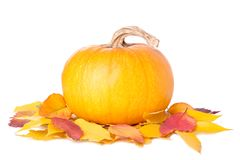 Orange pumpkin with leaves isolated on white background royalty free stock photography
