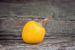 Orange pumpkin lies on bench. Orange pumpkin with Halloween teeth stock photos