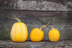 Orange pumpkin lies on bench. Orange pumpkin with Halloween teeth royalty free stock photography
