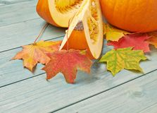 Orange pumpkin and maple leaves composition Stock Image