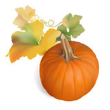 Orange Pumpkin with multicolor leaves - vector Royalty Free Stock Photo