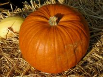 Orange pumpkin. G waiting for halloween Stock Photos