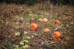 Orange pumpkin. S on the farm Royalty Free Stock Photography