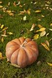 Orange pumpkin. Sitting on grass around fallen leafs, autumn background Stock Images