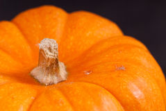 Orange Pumpkin Stem Royalty Free Stock Photography