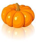 Orange pumpkin. Vector illustration. Stock Photography