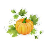 Orange pumpkin vegetable Stock Photo