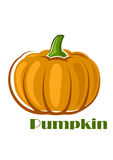 Orange pumpkin vegetable in cartoon style Stock Photography