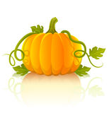 Orange pumpkin vegetable with green leaves Royalty Free Stock Photo