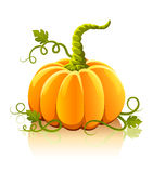 Orange pumpkin vegetable with green leaves Royalty Free Stock Photos