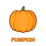 Orange Pumpkin Vegetables Cartoon Drawing Simple Design Stock Photography