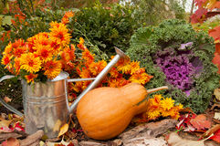 Orange pumpkin, watering can with chrysanthemums Stock Photography