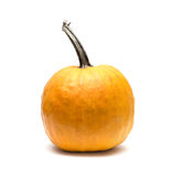 Orange pumpkin Royalty Free Stock Photography