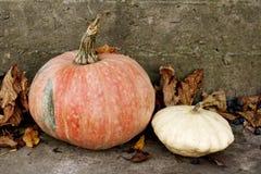 Orange pumpkin and white bush pumpkin Royalty Free Stock Photography