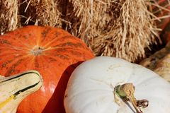Orange pumpkin, white pumpkin, gourd, hay bale fall background Royalty Free Stock Images