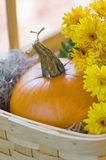 Orange pumpkin and yellow mums in basket. Bright orange pumpkin and yellow mums in basket by window selective DOF for Halloween Thanksgiving royalty free stock images