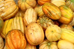 Orange pumpkins Stock Photos