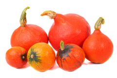 Orange pumpkins. On a white background Stock Images